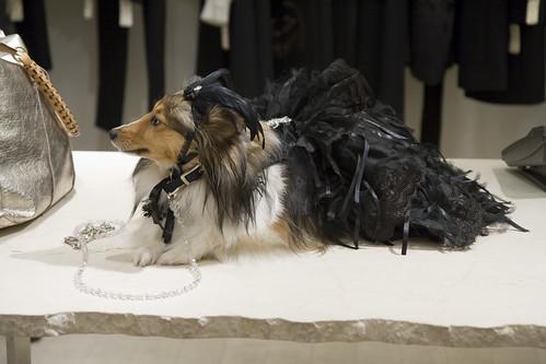 Canine Model