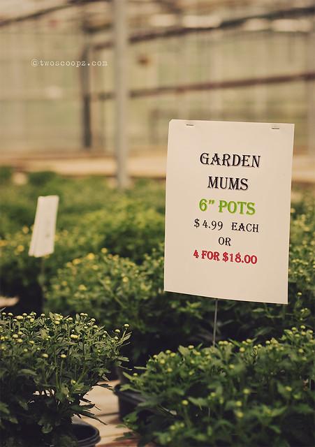 Fall Gardening 254/365