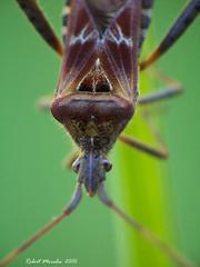 Beetle? (Just-Do-It!) Tags: macro nature beautiful digital kodak pennsylvania wildlife beetle upclose d7440