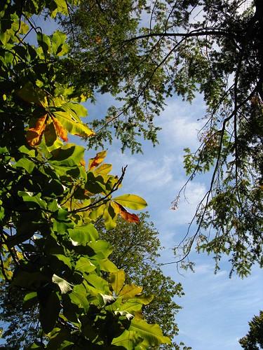 watch the sky through leaf