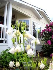 Shalimar Nice New Home