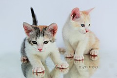 Kittens (Nouf Ahmed ) Tags: cats baby cute beautiful kids cat kid nice kitten photographer child or small kingdom kittens betty saudi animale mou    myo     pnu    muo  anamils   nouf     naserallah           myomyo         alnaserallah