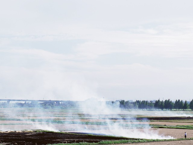 Open burning 野焼き