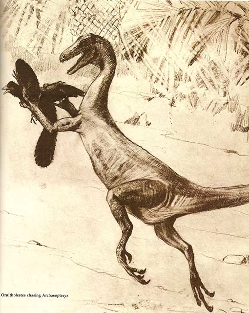 Charles R. Knight Ornitholestes and Archaeopteryx
