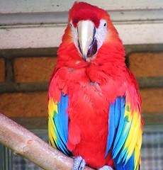 Bright colours (Jolanda van Tuijl) Tags: park blue red bird yellow blauw colours parrot geel rood avifauna kleuren vogelpark kleurig