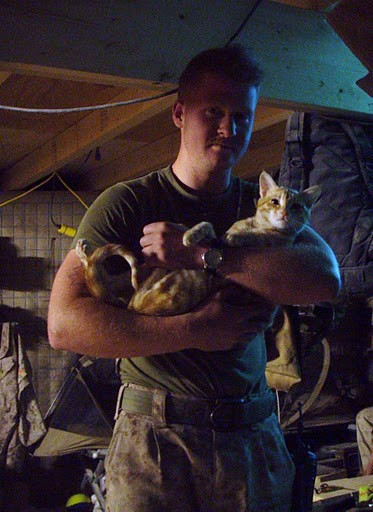 cute rescued kitten and us marine soldier