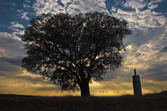 The Tree & Co (GUILLER D.) Tags: sky espaa naturaleza tree luz azul contraluz landscape arbol atardecer spain paisaje cielo nubes rbol nikkor ramas alcarria 2470mm chiloeches platinumheartaward nikond700