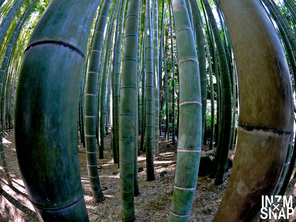 Bamboo - Fake HDR