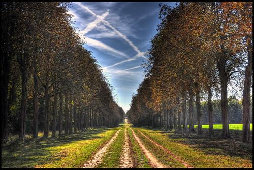 Versailles une allée du parc