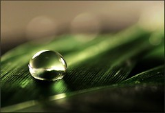 (Cminik) Tags: macro reflection green 20d water canon eos bokeh feather drop dslr narrowdof