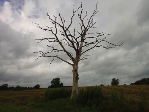 Lightening tree Photo
