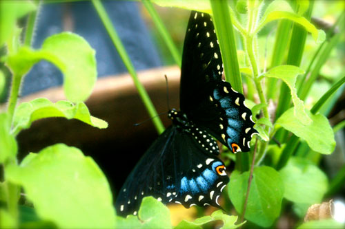 Butterfly Ready to Fly