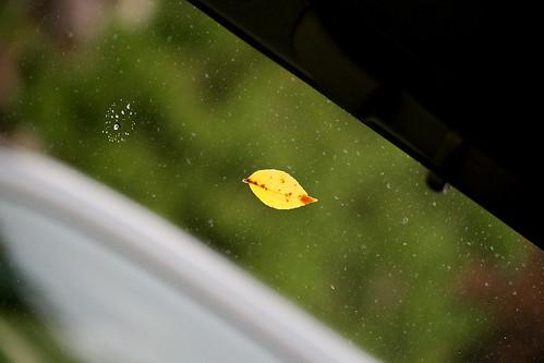 Fall's here! :)
