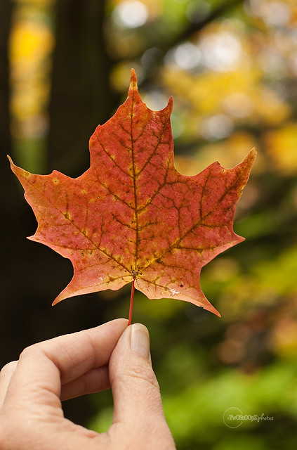 autumn begins 265/365