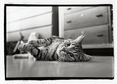 * (manne k.) Tags: film darkroom cat 35mm print stand blackwhite kodak agfa rodinal development 1100 trix400 schwarzweis tetenal n113