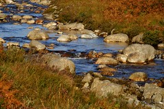NorthGlenSannoxWater21 (Assja) Tags: autumn mountains fall water leaves forest landscape golden scotland highlands rocks stream heather herbst glen hills naturereserve valley bracken rowan isleofarran birches indiansummer birchtree schottland wirbel herbststimmung ruska naturreservat hochland wildbach zauberwald birkenwald farnkraut heidekraut ebereschen torfmoor remarkabletrees feenwald wildpfad thebrackenisgoldinthesun northendofarran subarktischestimmung