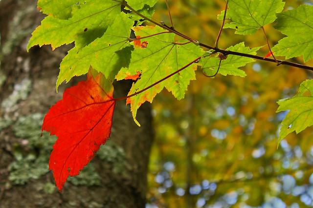 IMAGE: http://farm5.static.flickr.com/4085/5031121473_e11d42a326_z.jpg