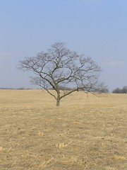 Standing Alone (eyriel) Tags: blue sky brown tree fall field grass nationalpark dailynaturetnc10
