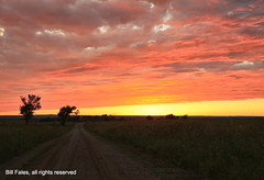 Colorful Kansas Sunset _MG_2122R (CP Images) Tags: road sunset sun storm color tree nature weather yellow clouds rural landscape outdoors kansas prairie sunrisesunset setting flinthills cpimages