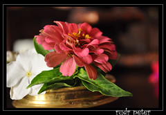 Flowers in a brass bowl (Rudr Peter | Smile to the world |) Tags: life flowers stilllife playing flower macro leaves still vase leafs arrangement stills flowerarrangement darkphotography potraits