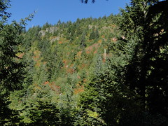 Fall colors on lower Shriner Peak trail.