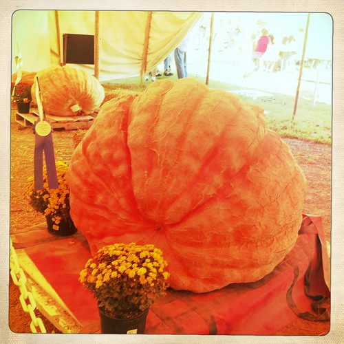 blue ribbon pumpkin