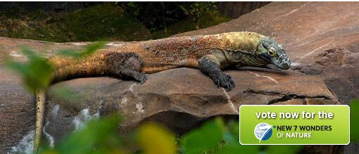 Vote Komodo for New 7 Wonders