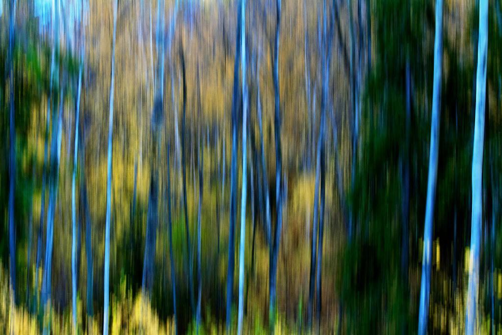 Trees 343/365