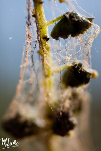 littlewebs