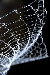 charlotte's jewelry box (wowitsstephen) Tags: bw macro water thread rain spider drops los angeles charlotte bokeh web silk cobweb string drizzle glistening platinumheartaward