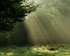 Morning beams (joeke pieters) Tags: morning holland netherlands ngc nederland sunbeams ochtend achterhoek winterswijk gelderland zonnestralen woold mywinners platinumheartaward bestofmywinners mygearandmepremium mygearandmebronze mygearandmesilver mygearandmegold mygearandmeplatinum mygearandmediamond mygearandmeplatinium