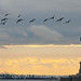 Statue of Liberty and Migrating Birds, Dusk - Click thumbnail for image options