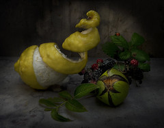 Lemon and Walnut (GARY HICKIN (GAZART)) Tags: food green leaves yellow fruit spiral leaf lemon blackberry pentax walnut ladybird nut peel brambles k20d stilllifephotograph garyhickin
