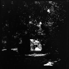 (...storrao...) Tags: trees shadow blackandwhite bw 6x6 film portugal silhouette gardens rollei rolleiflex mediumformat square person pessoa noiretblanc sombra nb bn porto analogue filme ilford fp4 jardins focomanual automat rvores serralves pretobranco silhueta analgico selfdeveloped ilfordfp4 125asa ilfordilfotechc rolleiflexautomat6x6modelk4a film:brand=ilford schneiderxenar3575 film:iso=125 storrao sofiatorro developer:brand=ilford film:name=ilfordfp4125 developer:name=ilfordilfotechc filmdev:recipe=6004 labirintodasrosas roseslabirinth