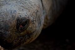turtle (paolo.carlini) Tags:
