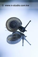 snail (SanforaQ8) Tags: camera trip blue macro lens photo europe sweden picture snail pic finepix fujifilm 2009 sv kw q8 105mm platinumphoto anawesomeshot s5pro sanfora nadamarafie nstudiolivecom wwwnstudiocomkw 66383666
