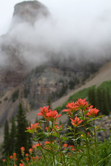 Indian Paintbrush (waitscm) Tags: flower banff indianpaintbrush banffnationalpark morainelake morrain