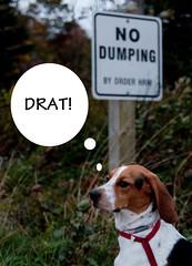 No Dumping! (Paguma / Darren) Tags: silly floyd tamronspaf1750mmf28xrdiiildasphericalif