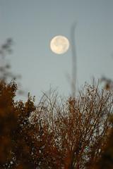 DSC_0479 (Rudi Pack Photography) Tags: wood morning trees sky sun moon home sunrise countryside bush dutonhill