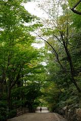20101022 Higashiyama 1 (BONGURI) Tags: nikon nagoya botanicalgarden   d300 higashiyama    chikusaku higashiyamazooandbotanicalgardens afsdxvrzoomnikkor1685mmf3556ged chikusaward