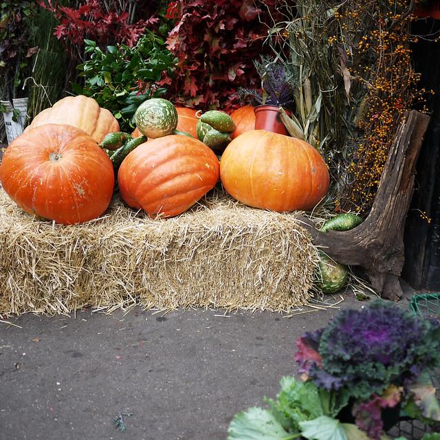 urban pumpkin patch #walkingtoworktoday