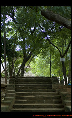 Way to Heaven - Shot @ Dakshinchitra (Vaithy Photoworks) Tags: park trees plants tree green greenest nature beautiful beauty grass leaves landscape eos madras steps greenery 1855mm chennai canoneos greener grenery dakshinchitra 1000d canoneos1000d canonefs1855mms vaithy vaithyphotoworks vaithiyanathank nathankv2010gmailcom vaithiyanathan vaithiyanathankrishnaswamy vaithyphotoworkscom kvaithiyanathan
