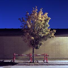 Tree (claus peder) Tags: longexposure 120 6x6 film night analog denmark kodak tripod ps bronica 160vc portra aarhus 80mm cablerelease sqai zenza zenzanon nationalisticcolours