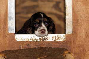 Puppy mill dog