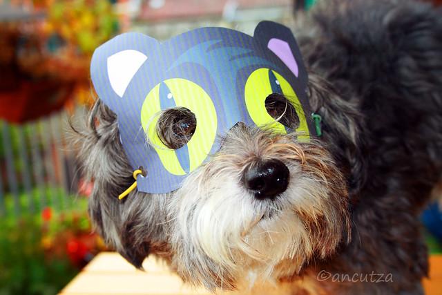 Cane  divertente mascherato per Halloween