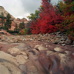Zion (aloreth) Tags: park fall creek lens utah national bronica zion f22 mm 50 sq ai 115 zenzanon secons