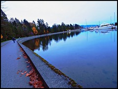 Depth reflection (Chazz Ranger) Tags: autumn canada reflection fall water vancouver marina bc olympus seawall stanleypark coalharbour e520