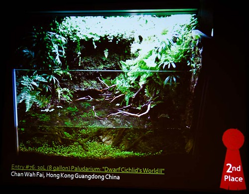 2010 AGA Contest: Paludarium 2nd Place