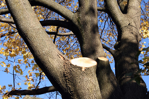 tree 074