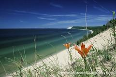'Dune Lily' (Ken Scott) Tags: usa island michigan lakemichigan greatlakes empire freshwater sleepingbeardune leelanau southmanitou manitouisland empirebluff sleepingbeardunenationallakeshore dunelily slidefilmdays kenscottphotography kenscottphotographycom